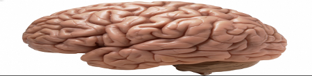 Tired Flat Brain